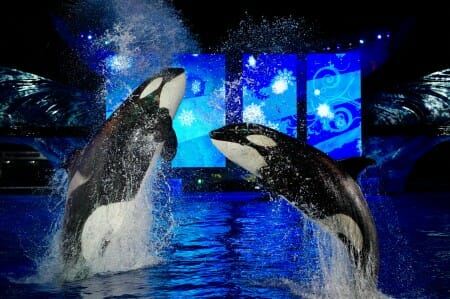 seaworld christmas shamu