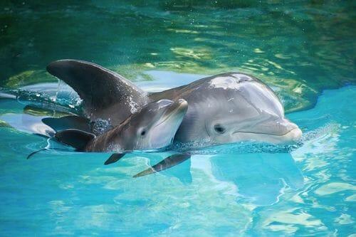dolphin seaworld