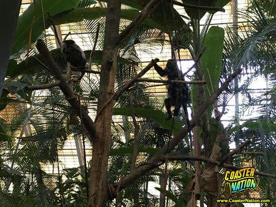 monkeys sitting