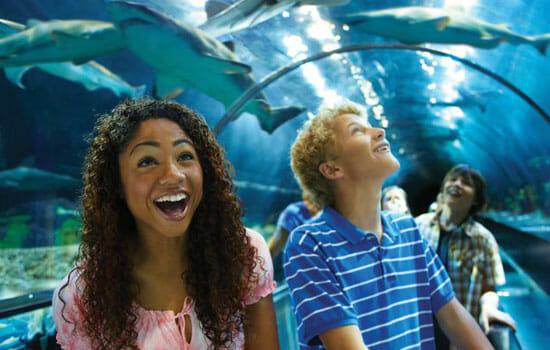 SeaWorld-shark-encounter