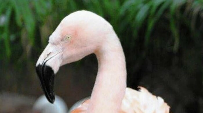 Pinky The Dancing Flamingo Killed By Guest at Busch Gardens Tampa