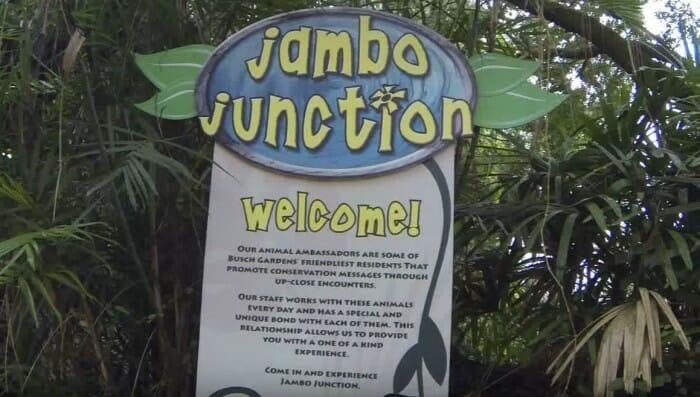 jambo_junction_bgt