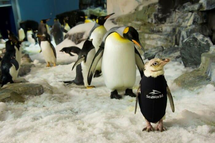 seaworld_penguins_care