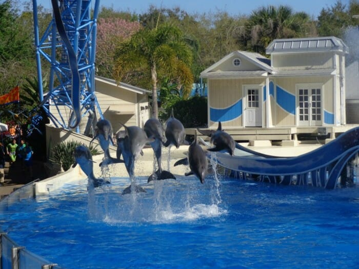 SeaWorld Replacing Blue Horizons with New Dolphin Days Show