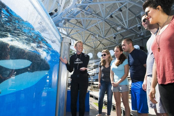SeaWorld Orlando Adds New Killer Whale Up-Close Tour