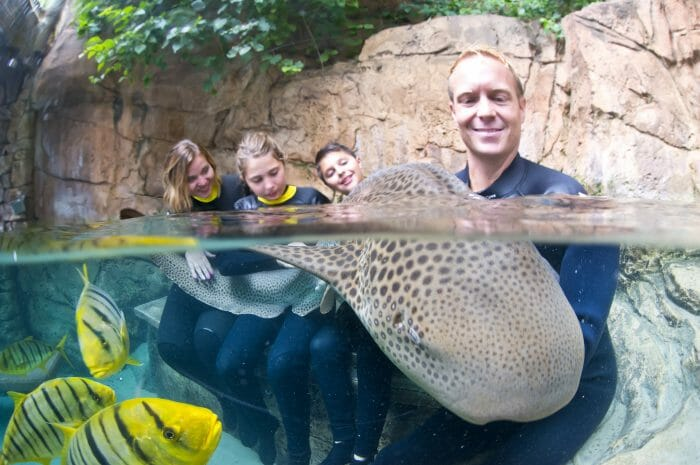 Swim With Sharks At SeaWorld's Discovery Cove