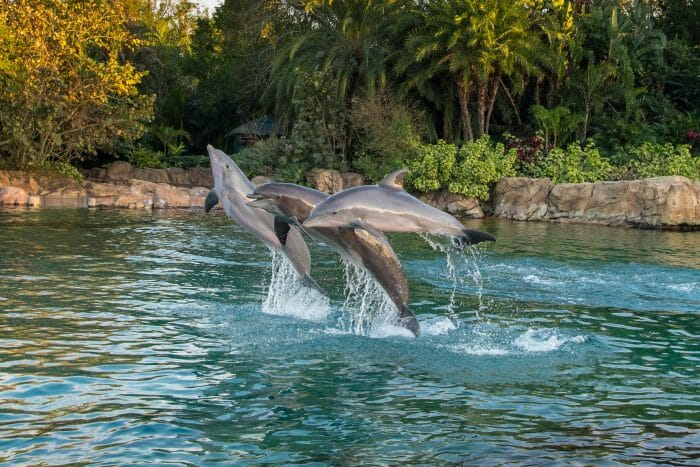 All New Nighttime Experience Coming To Discovery Cove