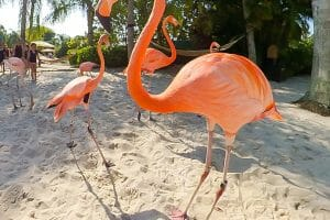 Discovery Cove Tickled Pink to Announce Flamboyance of Flamingos
