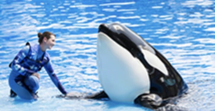New One-of-a-Kind SeaWorld Experience Features Orcas as Never Seen Before