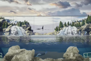 SeaWorld San Diego Reveals More Orca Encounter Details