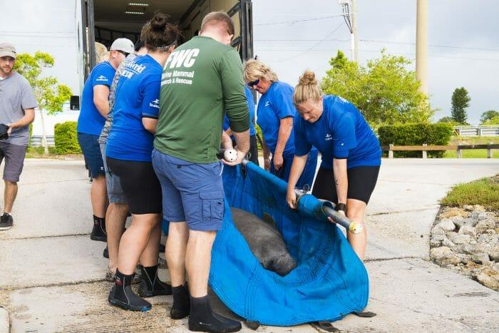 World Oceans Day Spotlights the Impact of Marine Debris on Animals